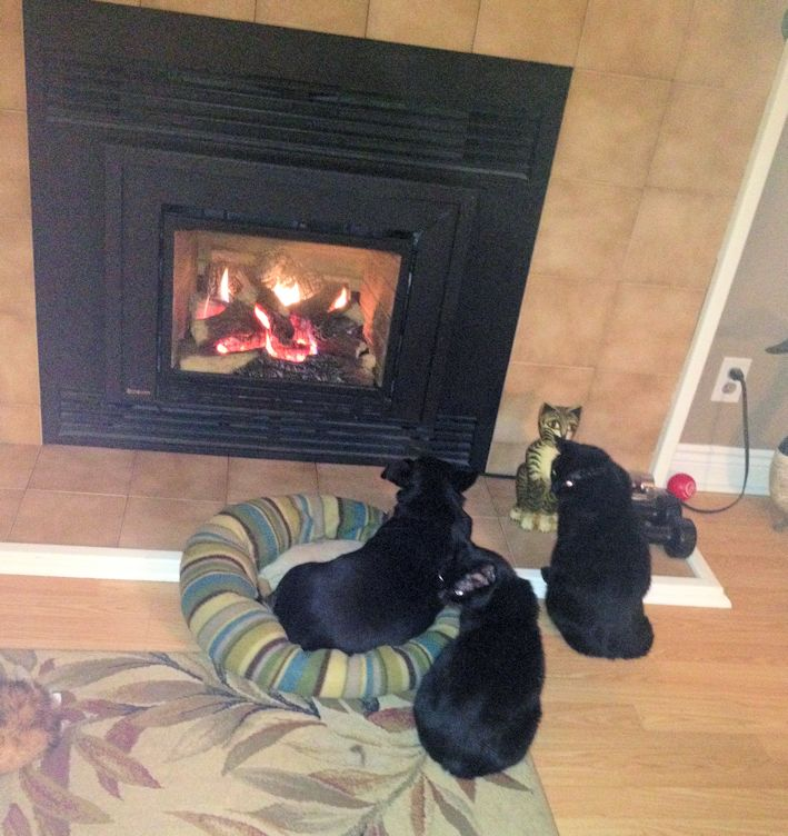 Bella at fireplace
