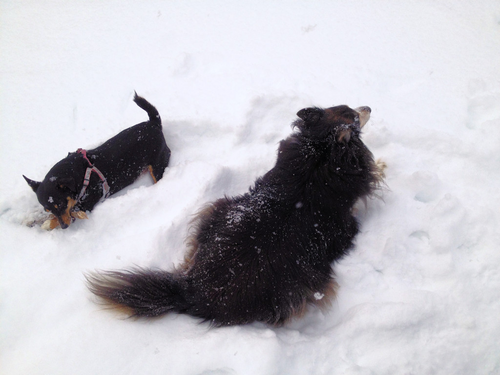 Sophie and Bella in the snow